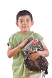 Cute boy holds chicken. Stock Image
