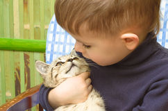 Cute boy and kitten Royalty Free Stock Photos