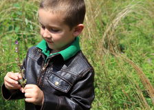 Cute boy looking at wildflowers just picked Royalty Free Stock Photo