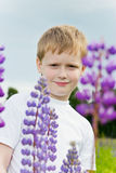 Cute boy in lupine flowers. Stock Photos