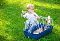 Cute boy opening a cage with a pet rabbit Royalty Free Stock Photo