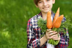 Cute boy with organic carrots royalty free stock photography