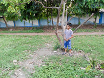 Cute boy in a park. Cute boy standing near a tree Stock Photos