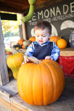 Cute Boy Picking Pumpkin Stock Photography