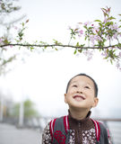 Cute boy playing in the garden Stock Image