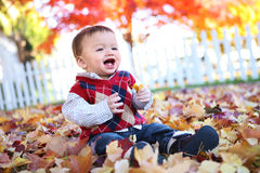 Cute Boy Playing in Leaves Stock Images