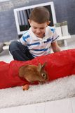 Cute boy playing with pet bunny Stock Photos