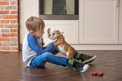 Cute boy playing with puppy english bulldog stock photography
