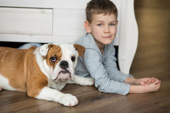 Cute boy plays on the floor on a carpet with puppies of English bulldog Royalty Free Stock Photos