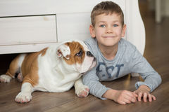 Cute boy plays on the floor on a carpet with puppies of English bulldog Royalty Free Stock Photography