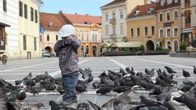 Cute boy run among the pigeons, bird feed and fly. Full HD stock video footage