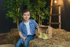 Cute boy sitting next to basket with goslings on hay Royalty Free Stock Photo
