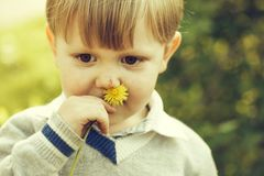 Cute boy sniffs at flower. Cute baby boy child with blond hair sniffs at flower yellow dandelion outdoors on summer day on natural background stock photography