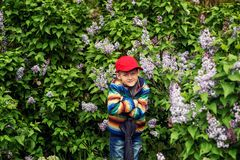 A boy in a spring garden with blooming lilacs . stock photography