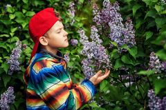 A boy in a spring garden with blooming lilacs . Cute boy in spring garden with blooming lilac . Children`s walks in the fresh air stock photo