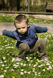 Cute boy in spring Royalty Free Stock Image