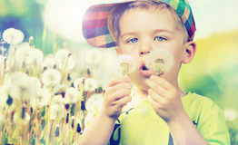 Cute boy staring at dandelions Royalty Free Stock Image