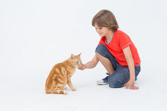 Cute boy touching cat on white background Royalty Free Stock Photo