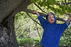 Cute Boy and Tree Stock Photos