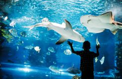 Cute boy watches fishes in aquarium stock photography