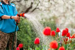 Cute boy watering plants from the hose, makes a rain in the garden. Child helping parents to grow flowers royalty free stock image