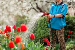 Cute boy watering plants from the hose, makes a rain in the garden. Child helping parents to grow flowers. Cute little boy watering plants from the hose, makes a stock photo