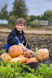 Cute boy with a wheelbarrow full of pumpkin stock images