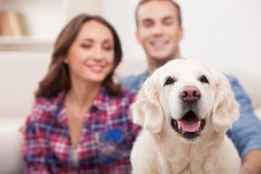 Cute boyfriend and girlfriend with pretty puppy Royalty Free Stock Photos