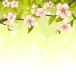 Cute Branches of Cherry Blossom Tree. Natural Background - Vector Royalty Free Stock Images