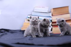 Cute kittens and books Royalty Free Stock Photography