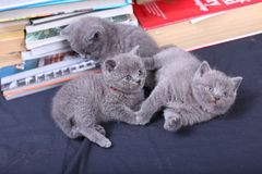 Cute kittens and books Royalty Free Stock Photo