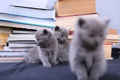 Cute kittens and books Stock Photos