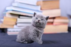 Cute kitten and books Stock Images