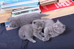 Cute kittens and books Stock Images