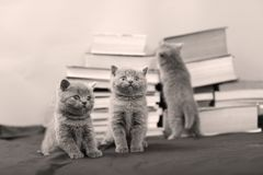 Cute kittens and books