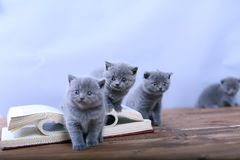 Cute kitten reading Royalty Free Stock Photo