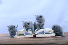 Cute kitten reading Stock Image