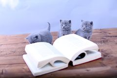 Cute kitten reading Stock Photos