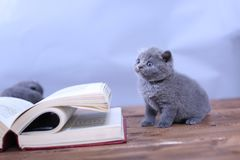Cute kitten walks on a book Stock Image