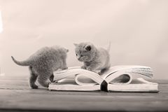 Cute kittens playing with a book Royalty Free Stock Photo