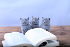 Cute kitten reading Royalty Free Stock Photos