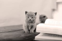 Cute kitten and a book Royalty Free Stock Images