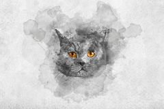 Cute British shorthair cat`s watercolor portrait. Purebred domestic animal. Artistic painting vector illustration