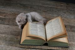 Baby kitten playing with a vintage book, wooden background. Cute British Shorthair kitten sitting near some books, copy space stock image