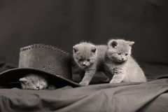 Cute kittens in a black hat royalty free stock photography