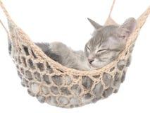 Cute british shorthair tabby kitten sleeping in hammock Stock Photos