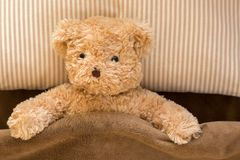 Cute brown bear under fleece blanket, resting on stripe pillow a. Cute brown bear under fleece blanket, stuffed animal toy resting on stripe pillow and brown bed Royalty Free Stock Image