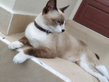 Cute brown cat Stock Photos