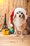 Cute brown color chihuahua dog with christmas concept ,travel st Stock Photo