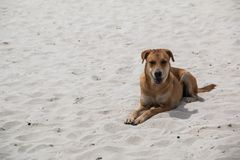 A Cute dog smiling and sitting on white sand beach. royalty free stock photos